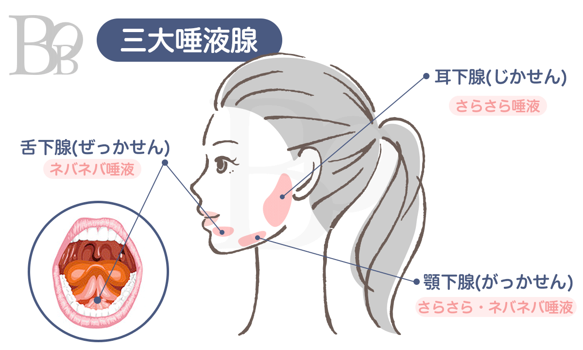 唾液が出る場所「唾液腺」図解。耳の下、顎の下、下の裏側にそれぞれ唾液腺があります
